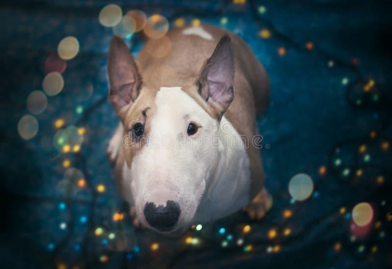 Ein Hund begrüßt das neue Jahr stockbild