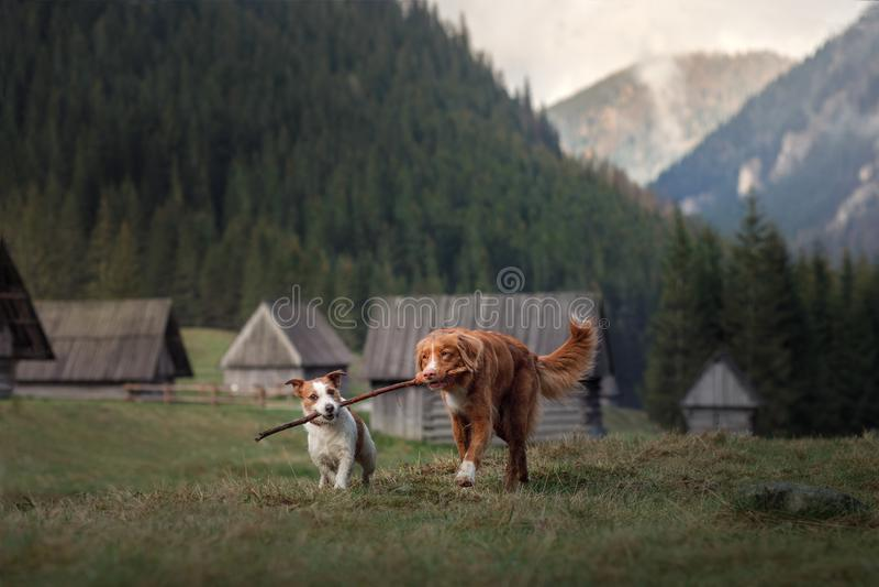 Ein Hund in den Bergen Reisen mit dem Haustier Gesunder Lebensstil stockfotos