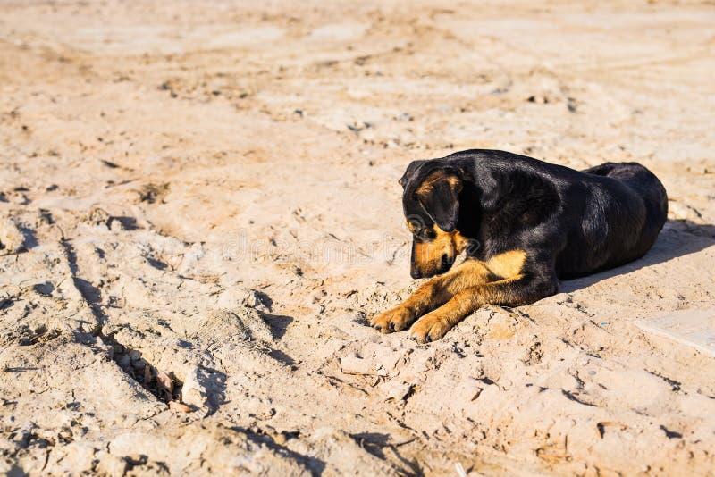 Ein Hund, der auf Sand am Strand, mit traurigen Augen und nassem Pelz liegt armes Einsamkeitshaustier Einsamer Hund, der auf sein lizenzfreies stockfoto