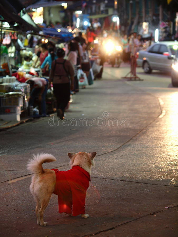 Ein Hund, der rotes Hemd wering ist stockfoto