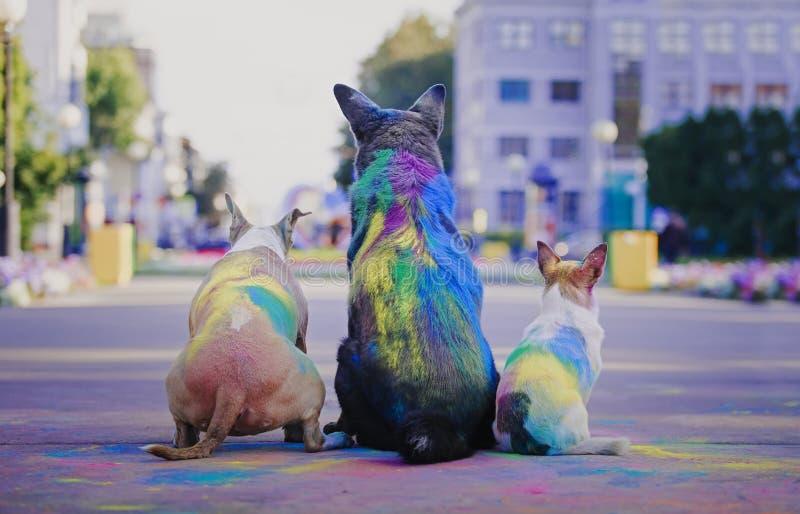 Ein Hund, der Spaß mit Farben von holi hat lizenzfreies stockbild