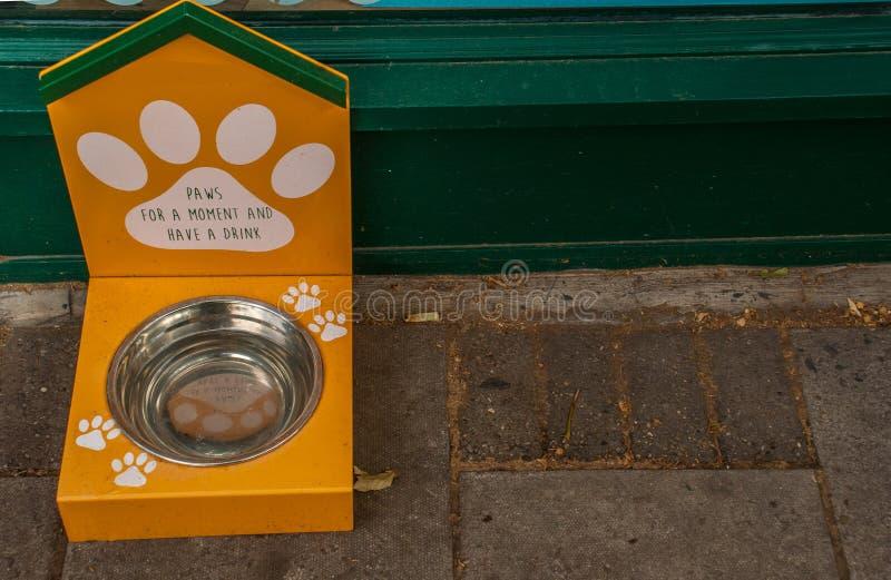 Ein Hund, der vor einer silbernen Metallschüssel etwas in sie für Abendessenzeit gesetzt zu werden Nahrung, wartet stockbild
