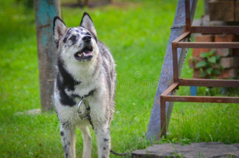 Ein Hund in einem Wachgestell über einen Zaun stockbild