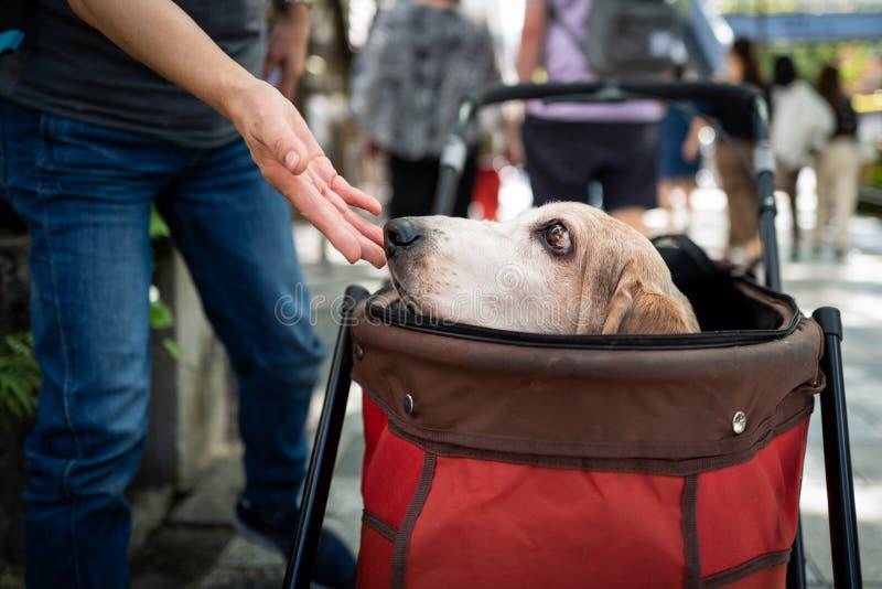 Ein Hund in einer Kiste in Tokio lizenzfreie stockfotos