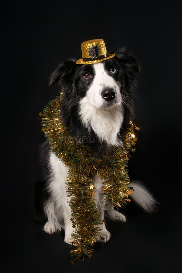 Ein Hund im Hut und im Lametta stockbild