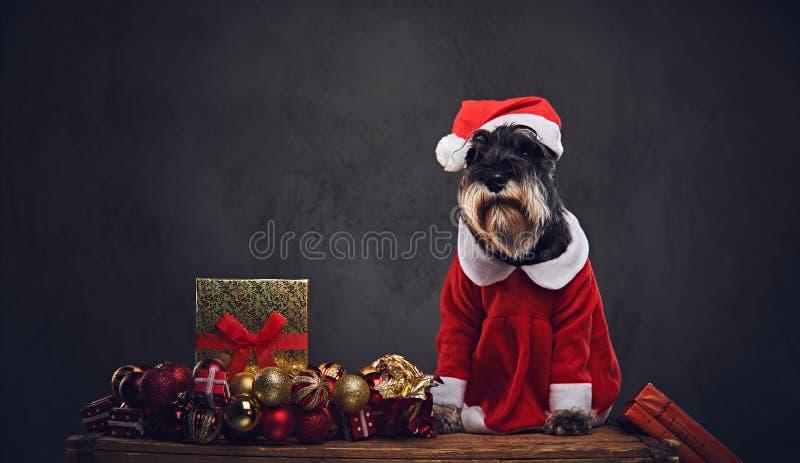 Ein Hund kleidete im Weihnachts-Kleid auf einer Holzkiste mit Weihnachts-garla an lizenzfreie stockfotos