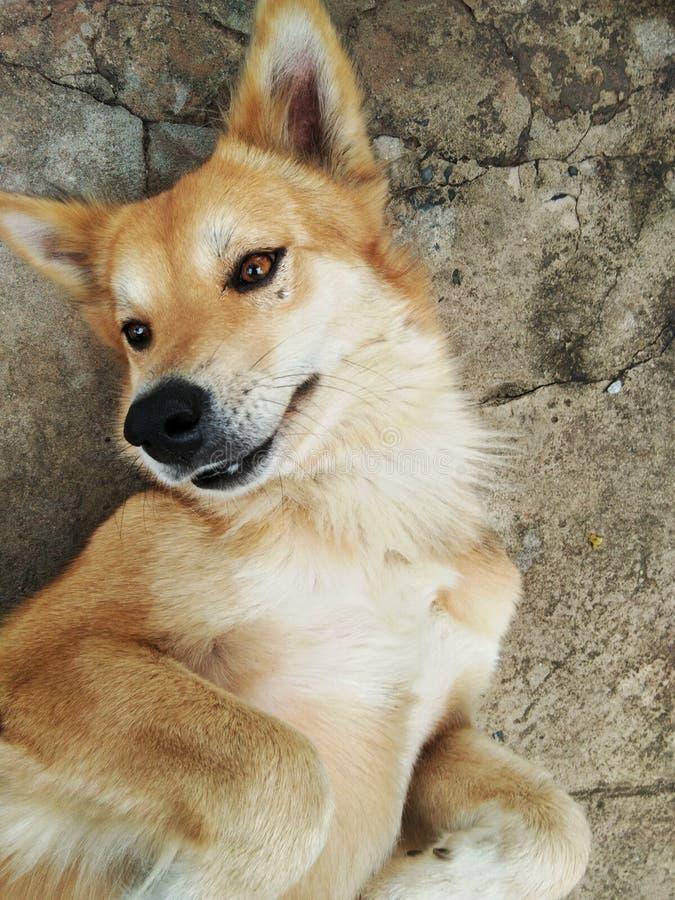 Ein Hund lächelt stockbilder