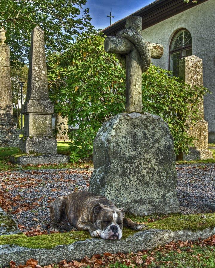 Ein Hund mit einem defekten Herzen der Loyalität in HDR stockfoto