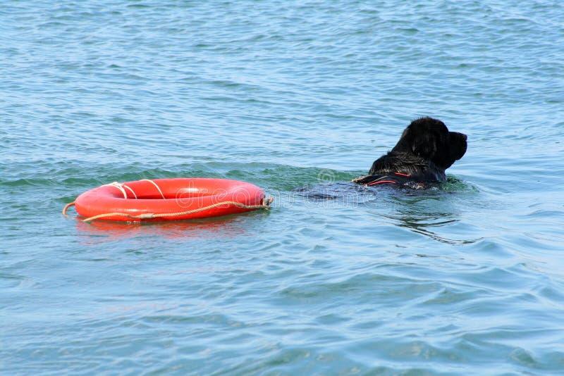 Ein Hund mit einer Rettungsleine lizenzfreies stockbild