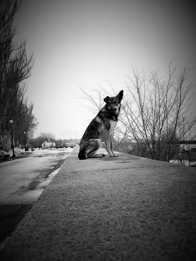 Ein Hund ohne seinen Meister stockbild
