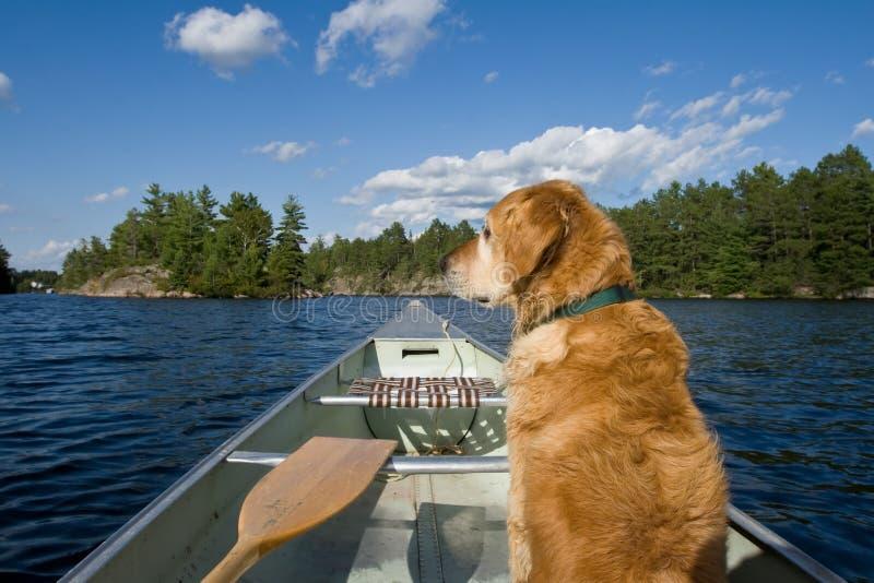 Ein Hund in seinem Kanu. stockfotografie