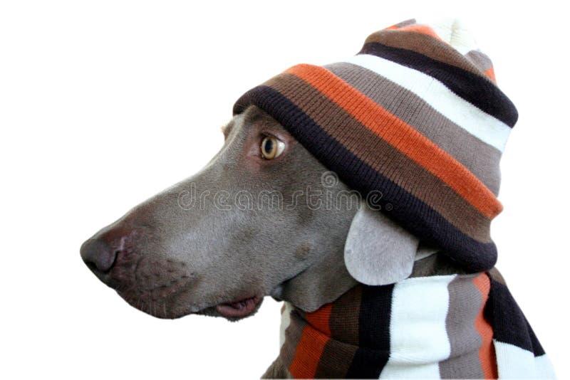 Ein Hundeprofil mit Hut und Schal stockfotos