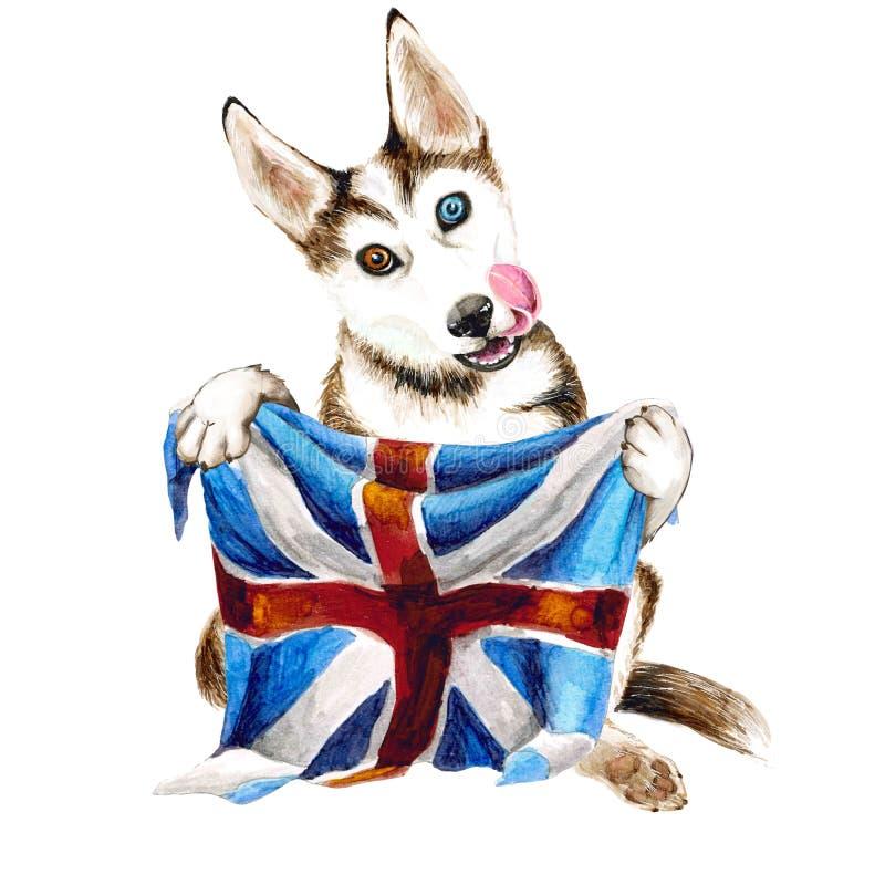 Ein Hunderasse Schlittenhund hält in seinen Tatzen die Flagge von Großbritannien Getrennt auf weißem Hintergrund Welpenillustrati vektor abbildung