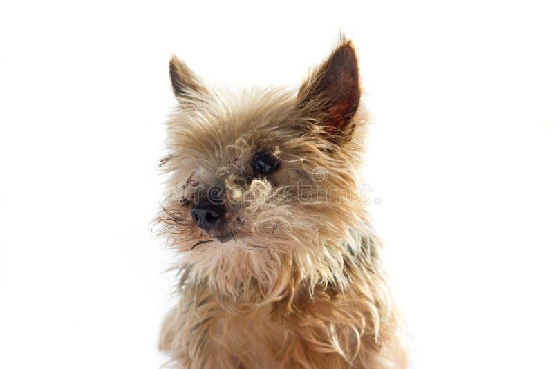 Ein Hundesitzen lizenzfreie stockfotos