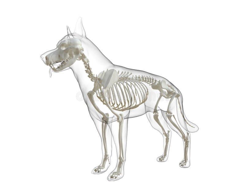 Ein Hundeskelett stock abbildung