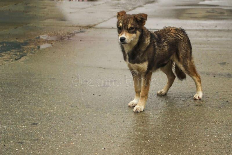 Ein Hundewelpe naß auf Straße lizenzfreie stockfotografie