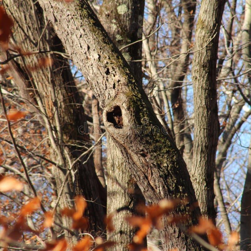 Ein hungriger Freund im Wald im Winter von 2018 lizenzfreie stockfotografie