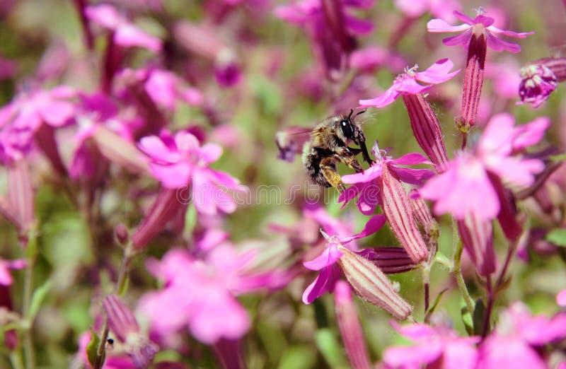 Ein Insekt Lizenzfreies Stockfoto