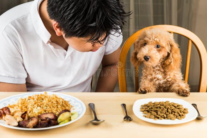 Ein Jugendlicher mit einem Pudelwelpen auf Speisetische mit Tellervoll Lebensmittel und schrotet stockfoto