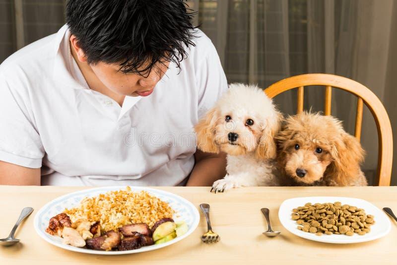 Ein Jugendlicher mit zwei Pudelwelpen auf Speisetische mit Tellervoll Lebensmittel und schrotet lizenzfreie stockfotos