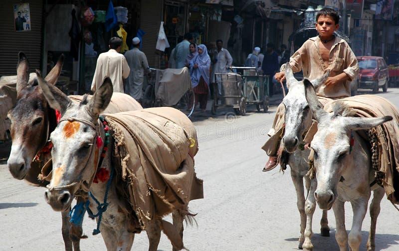 Ein Junge, der Esel in Peshawar, Pakistan herbeiführt lizenzfreies stockfoto