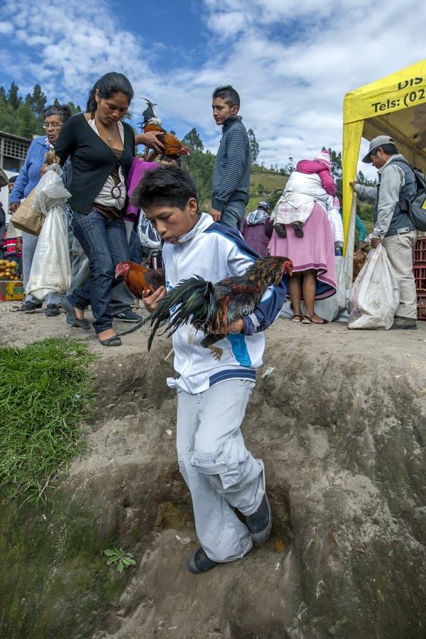 Ein Junge, der zwei Hühner trägt, die er hofft, am Tiermarkt Otavolo in Ecuador, Südamerika zu verkaufen lizenzfreie stockfotos