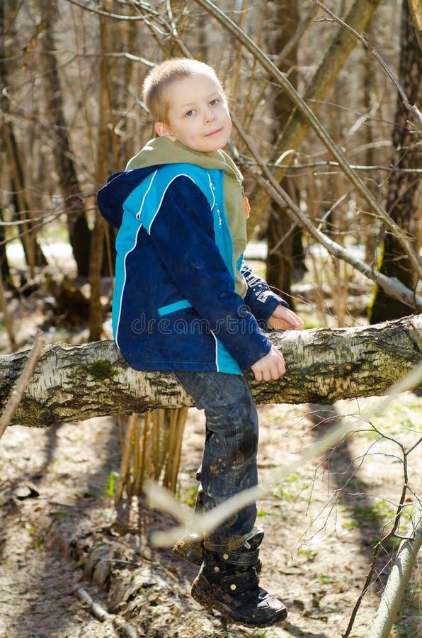 Ein Junge klettert auf einem Baum stockfotos