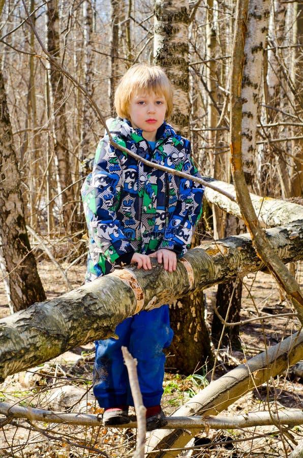 Ein Junge klettert auf einem Baum lizenzfreie stockfotografie
