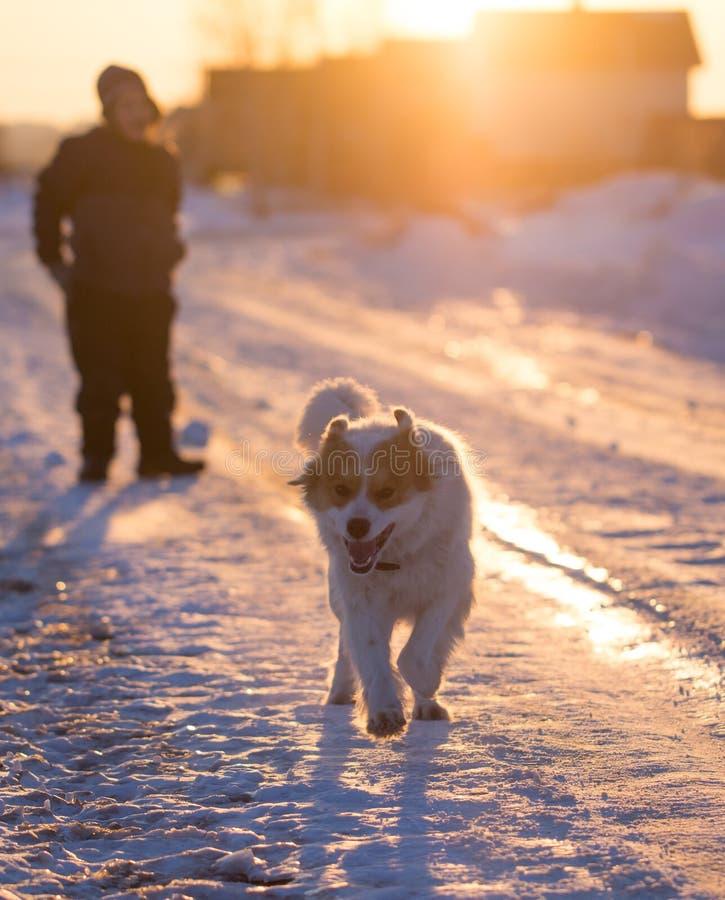 Ein Junge mit einem Hund in den Strahlen eines Sonnenuntergangs auf dem Schnee stockfotos