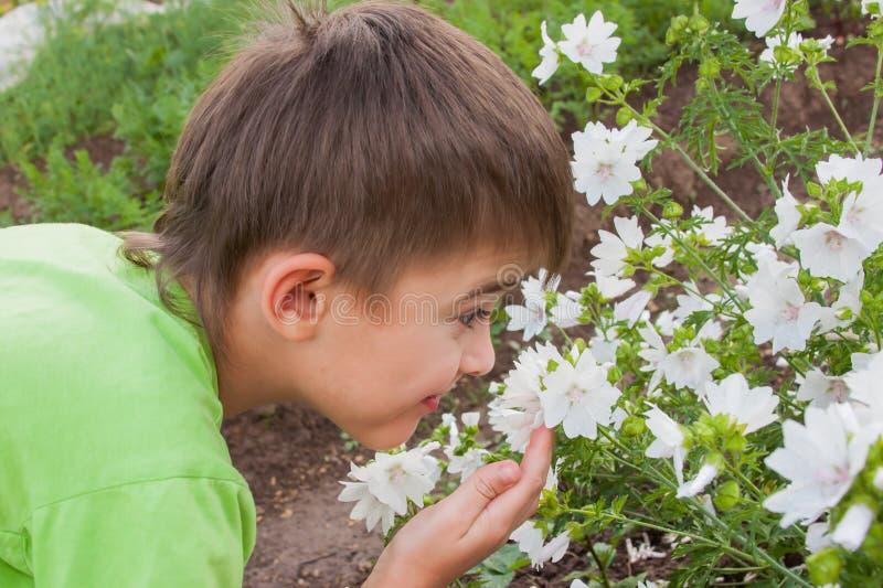 Ein Junge riecht Blumen auf einem Vorstadt stockfoto