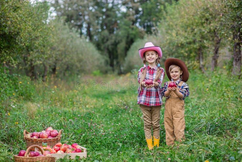 Ein Junge und ein Mädchen in bovboyskih Hüten werden in den Herbst Äpfel sammelnd miteinbezogen stockfotos