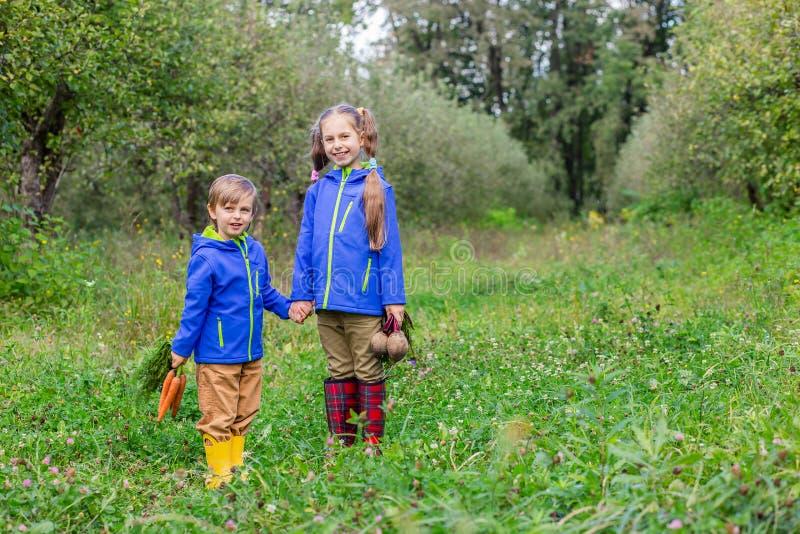 Ein Junge und ein Mädchen halten Karotten und rote Rüben in ihren Händen, um im Garten gerade zusammenzutreten lizenzfreie stockbilder