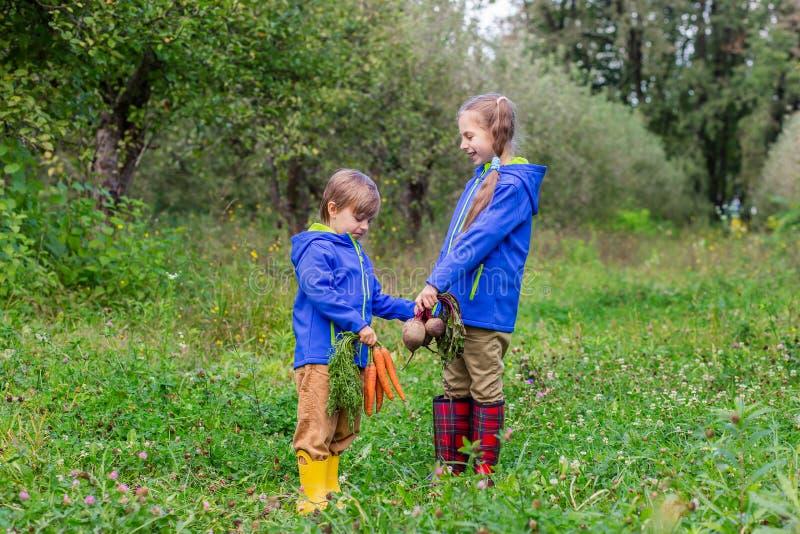 Ein Junge und ein Mädchen halten Karotten und rote Rüben in ihren Händen, um im Garten gerade zusammenzutreten lizenzfreie stockfotografie