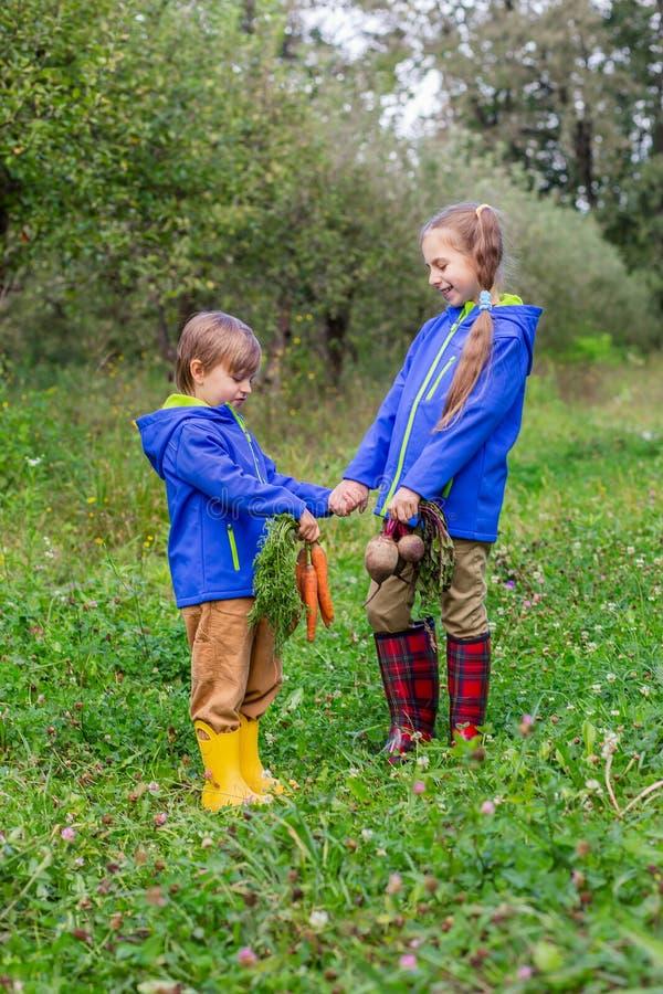 Ein Junge und ein Mädchen halten Karotten und rote Rüben in ihren Händen, um im Garten gerade zusammenzutreten stockbilder