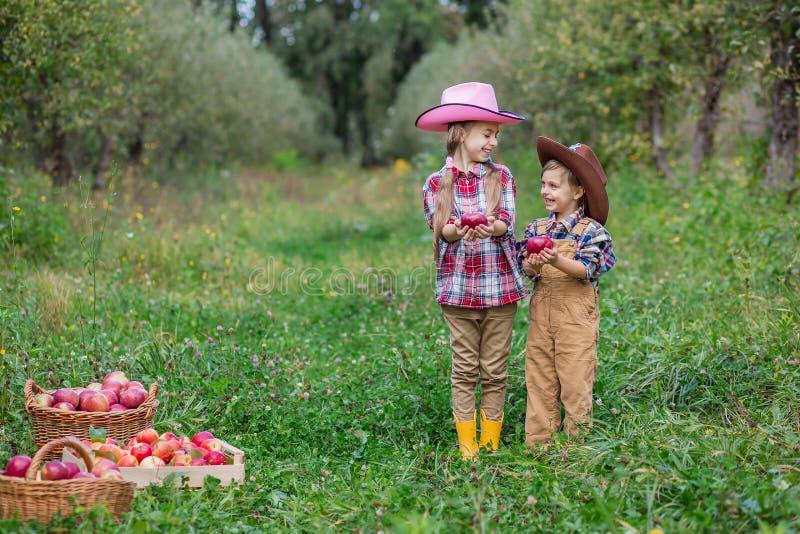 Ein Junge und ein M?dchen in bovboyskih H?ten werden in den Herbst ?pfel sammelnd miteinbezogen lizenzfreie stockfotografie