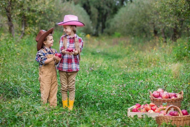 Ein Junge und ein M?dchen in bovboyskih H?ten werden in den Herbst ?pfel sammelnd miteinbezogen stockfoto
