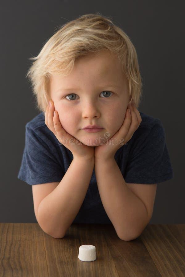 Ein junger blonder Junge betrachtet einen einzelnen Eibisch lizenzfreie stockfotografie