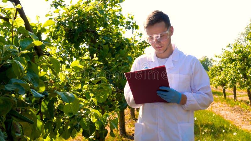 Ein junger gut aussehender männlicher Biologe oder Agronomist, der in einer Tablette arbeitet und einen weißen Mantel trägt, ei lizenzfreie stockfotografie