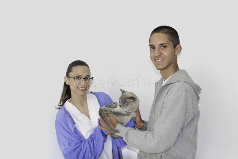 Ein junger Mann holt einem Tierarzt eine siamesische Katze lizenzfreie stockfotos