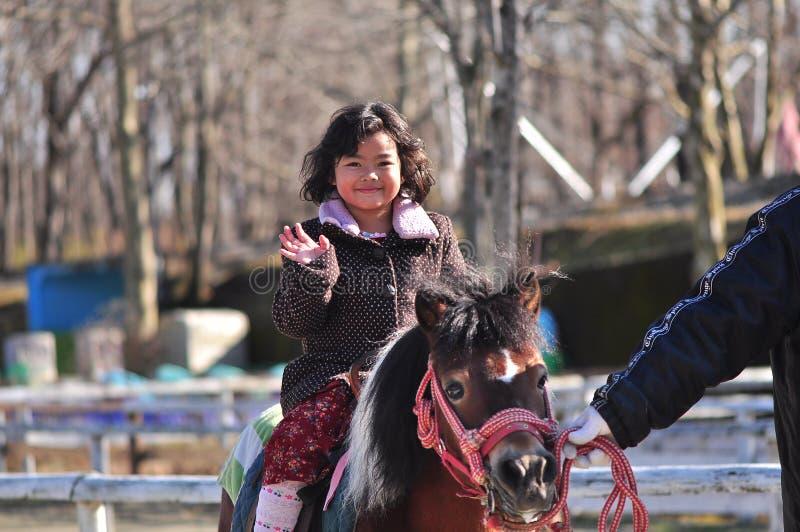 Ein junger Pferdenmitfahrer stockbild