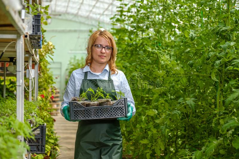 Ein junges Mädchen arbeitet in einem Gewächshaus Gemüsesektor lizenzfreies stockfoto