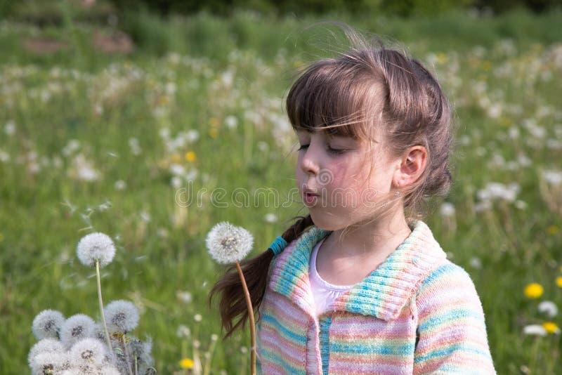 Ein junges Mädchen am frühen Morgen auf einer Frühlingswiese, die auf einem Blumenstrauß des weißen Löwenzahns durchbrennt stockfotos