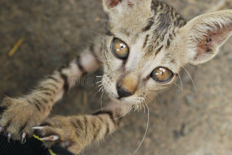 Ein Kätzchen, das die Kamera untersucht stockfotografie
