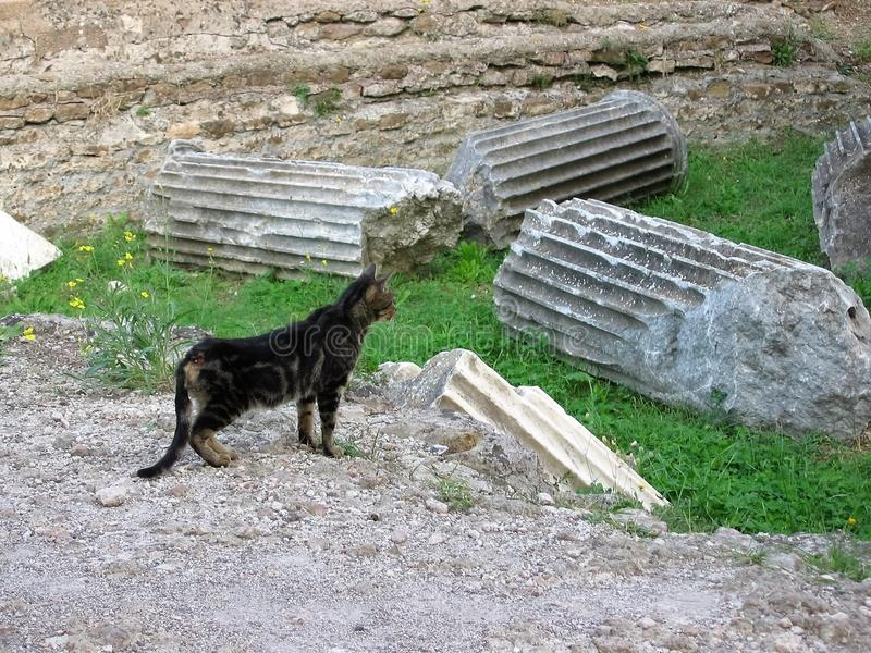 Ein Kätzchen der getigerten Katze in den Ruinen eines Tempels zu Tivoli in Italien stockbilder