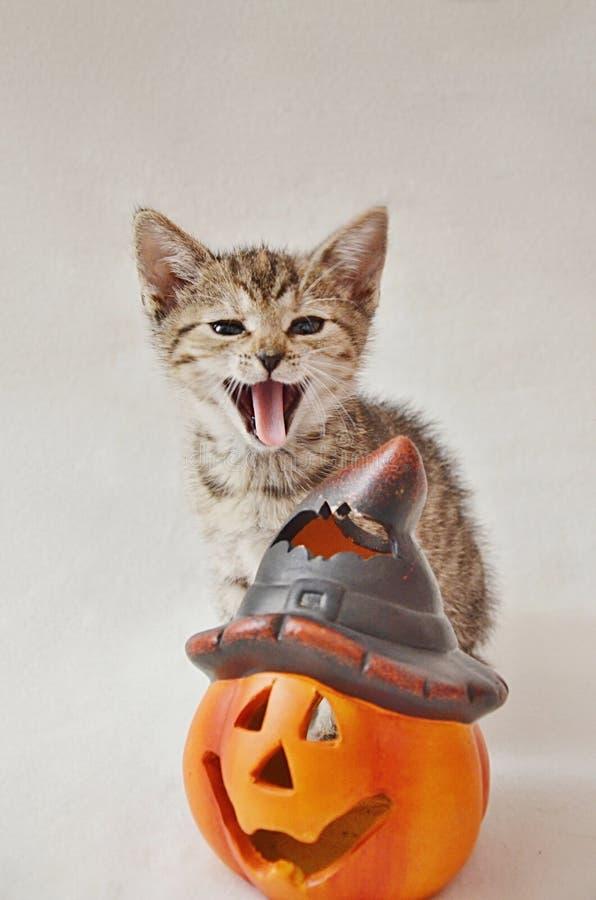 Ein Kätzchen mit einem Schmunzeln und eine Halloween-Dekoration stockfotografie