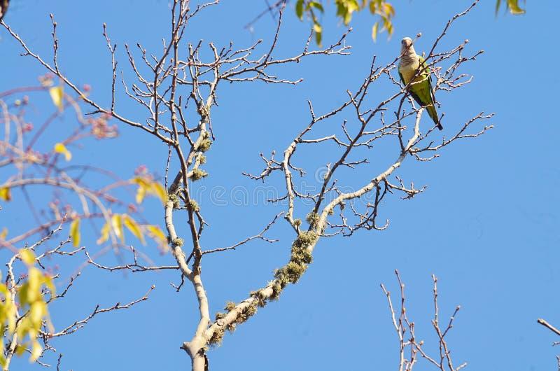 Ein Kakadu hoch gehockt im Baum lizenzfreie stockfotografie