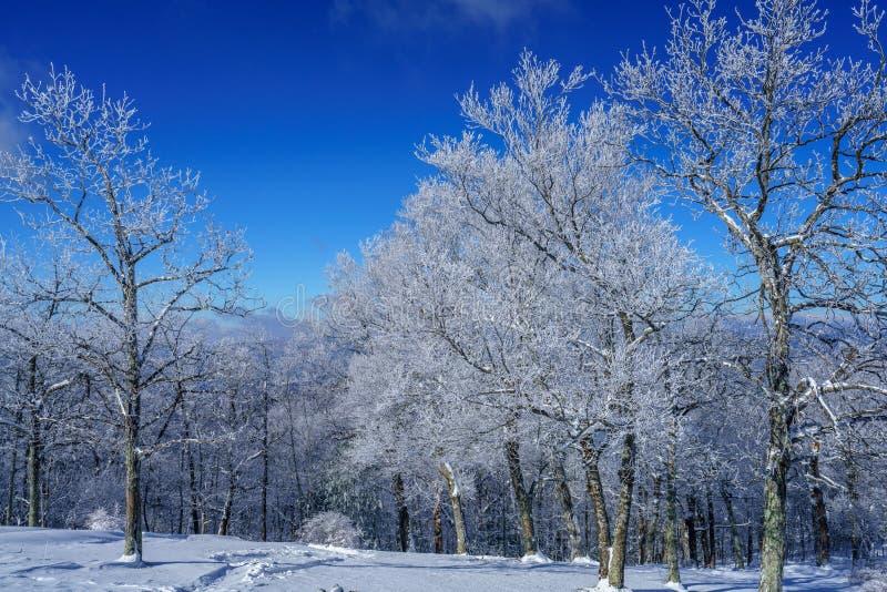 Ein kalter, klarer Winter-Tag lizenzfreie stockfotografie