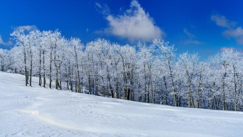 Ein kalter, klarer Winter-Tag auf der Wiese stockfoto