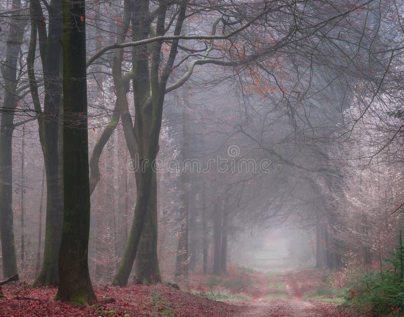 Ein kalter nebeliger Morgen im Wald lizenzfreies stockbild