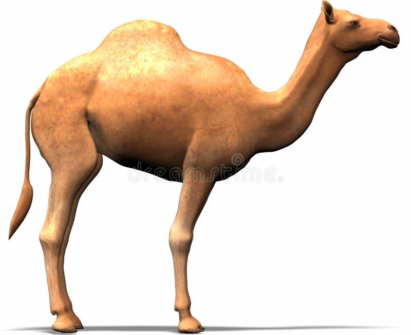 Ein Kamel stock abbildung
